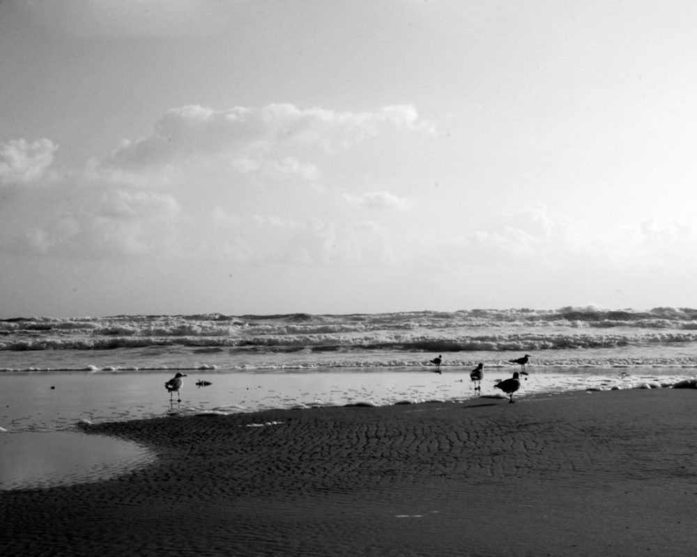 Daytona Beach-Blank